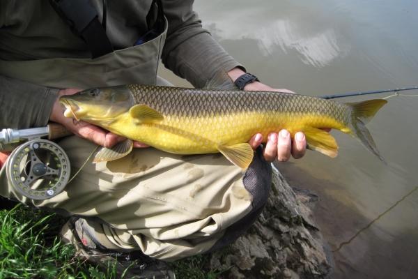 licencias de pesca de extremadura: