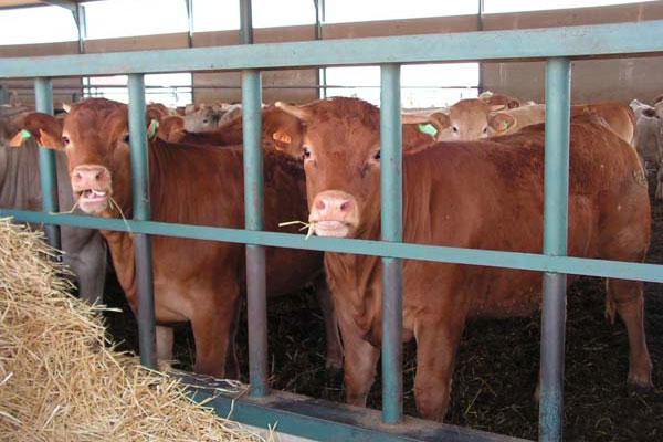 Los ganaderos no pagar n las tasas de las gu as ganaderas for Oficina veterinaria virtual