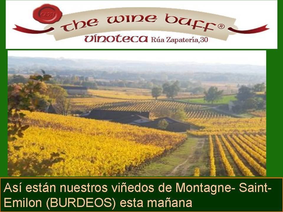Web fotos del muro de the wine buff vinedo otono