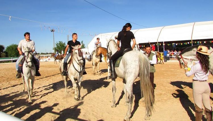 Normal x feria del caballo de almaraz