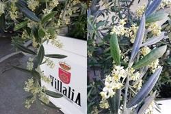 Floracion de villalia dam preview