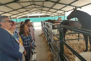 20190913 feria sector equino torrejoncillo 4 normal 3 2