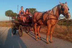 Actividades barbancho paseos coche de caballos 1964990 610014782400111 716262817 n dam preview