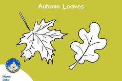 Fichas baby erasmus autumn leaves baby erasmus dam preview
