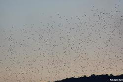 Aves de extremadura aves de extremadura dam preview