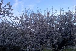 Floraci n floraci n image 4 dam preview