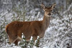 Fauna en el parque nacional de monfrague rutas por monfrague fauna en el parque nacional de monfragu dam preview