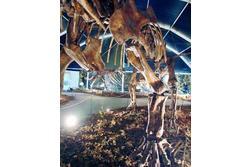 Exposicion dinopetrea 11f1d 47fa dam preview
