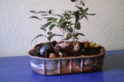 Los bonsais 3 7f92 896c dam preview