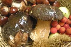 Micologia un mundo casi infinito setas a la caza de un paladar dam preview