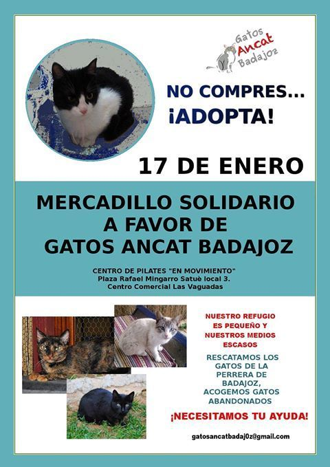 Normal mercadillo solidario a favor de los gatos ancat badajoz