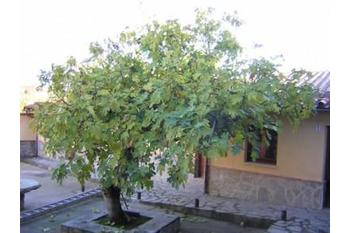 Normal 04db bafa